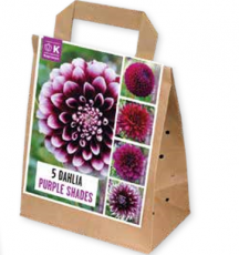 Георгины пурпурные 100 дней цветения 5шт/упак