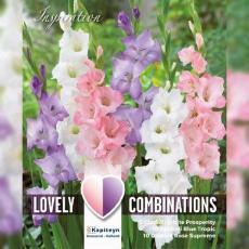 Смесь гладиолусы белые, синие и розовые 25шт/упак