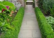 Самшит вечнозеленый С5 30-40см колоновидный
