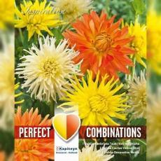 Смесь георгины кактусовые красные, оранжевые и белые 3шт/упак