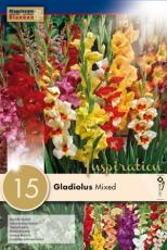 Гладиолусы батерфляй- смесь 15шт