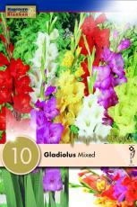 Гладиолусы - смесь 10шт